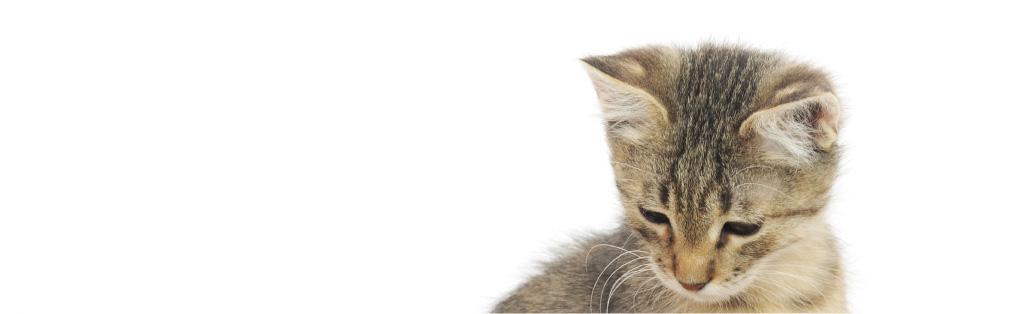 Kontakt | Solrød Dyreklinik | Din moderne smådyrs klinik i Solrød Strand