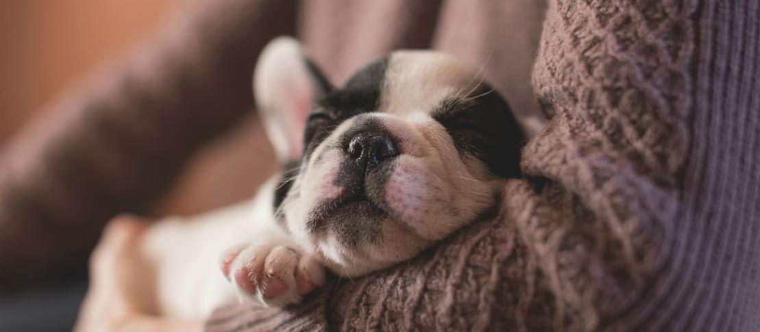 Dyrlæge | Solrød Dyreklinik | Hundehvalp