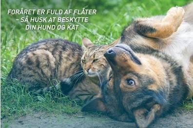 Forebyggende Behandling Af Lopper Og Flåter Hos Hund Og Kat