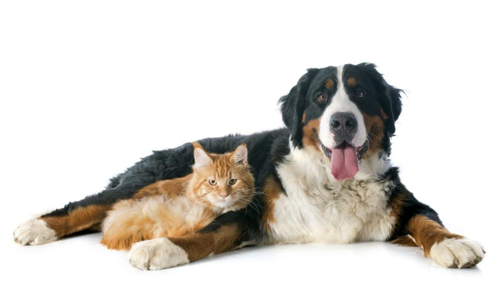 Dyrlæge | Solrød Dyreklinik | Hund og kat
